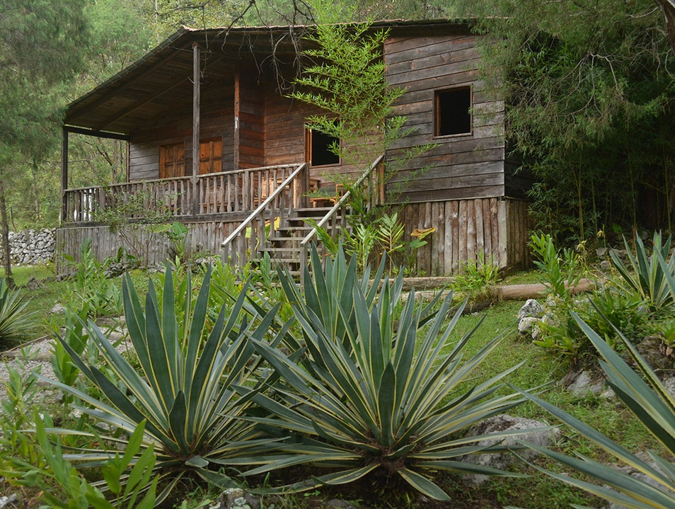 Eco cabins in the forest
