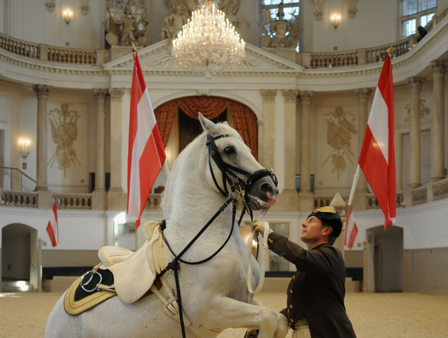 Performances of the Beloved Lipizzaner horses