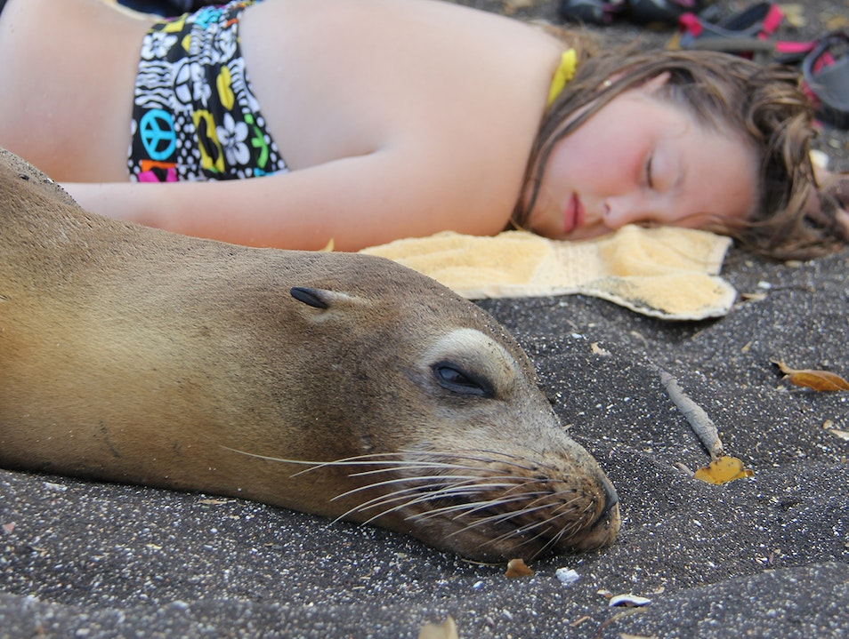 Napping with a Sea Lion Galápagos Islands  Ecuador