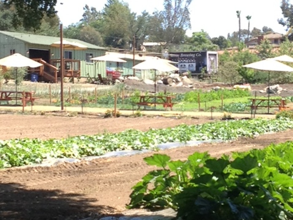 Down on the Farm  ~ Urban Farming as Social Topography Escondido California United States