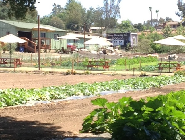 Down on the Farm  ~ Urban Farming as Social Topography