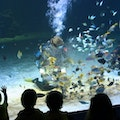 Universeum Gothenburg  Sweden