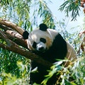 Smithsonian's National Zoo and Conservation Biology Institute Washington, D.C. District of Columbia United States