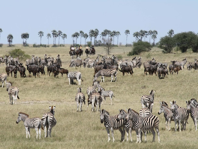 How to Beat the Safari Crowds