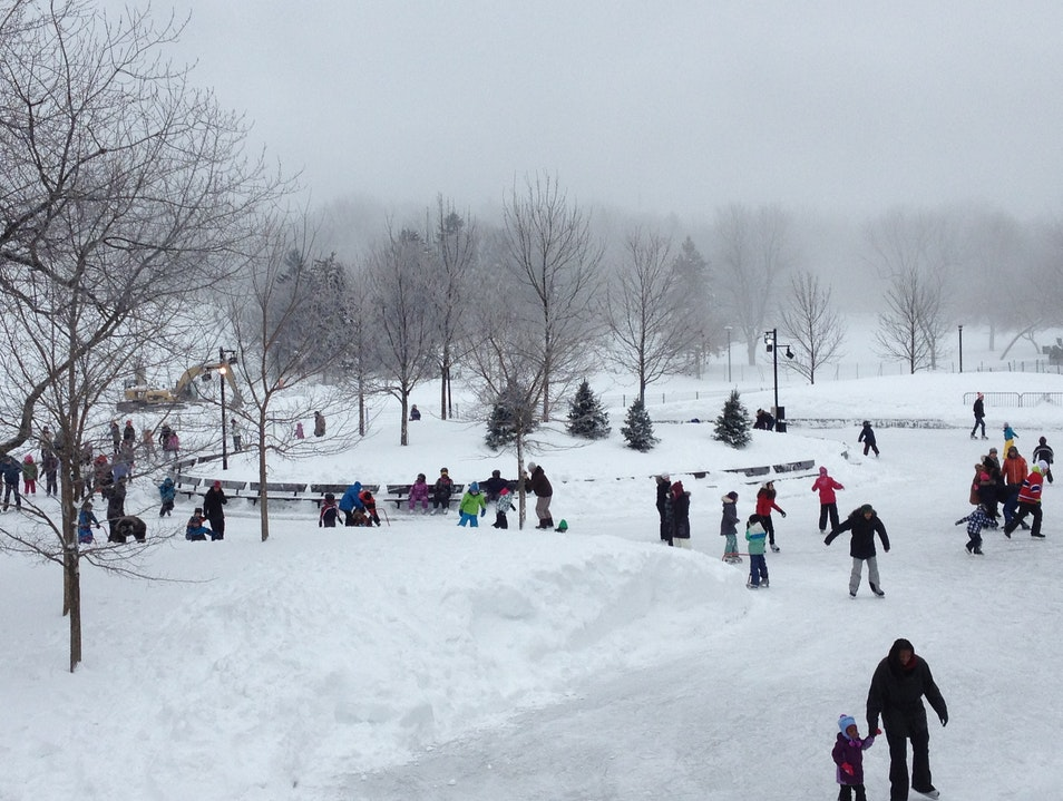 Winter Activities in the Parc du Mont-Royal Montreal  Canada