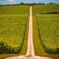 Wine Roads of Baranja Suza  Croatia