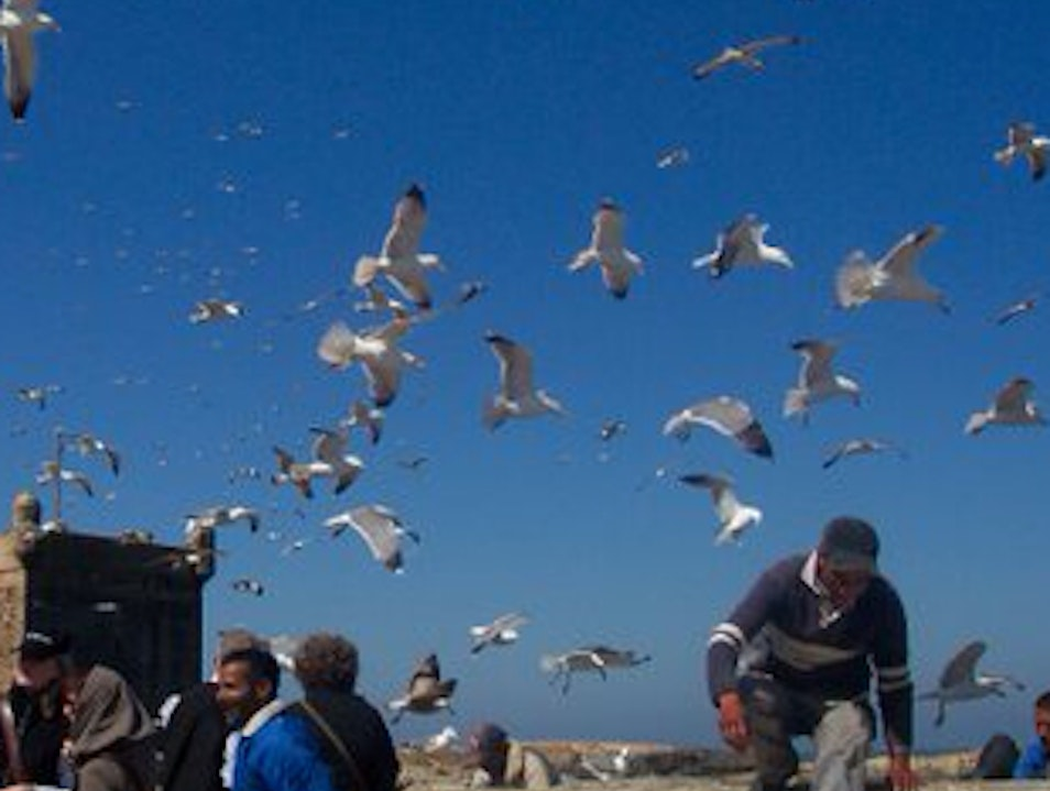 Feed The Birds Essaouira  Morocco