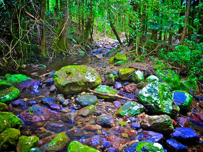 Crystal Creek Rainforest Retreat Upper Crystal Creek  Australia