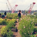 Eagle Street Rooftop Farm New York New York United States