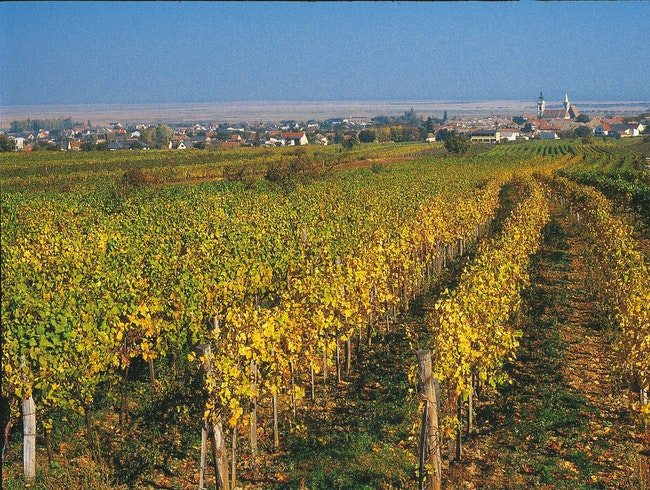 Deep reds and sweet dessert wines in Burgenland