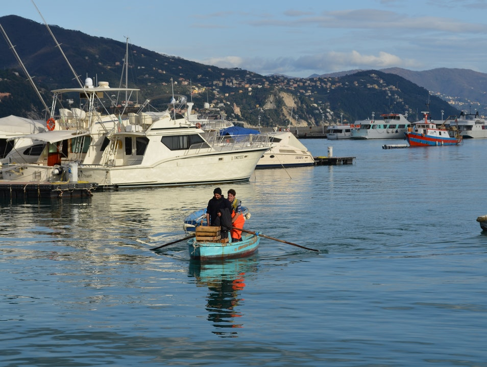 Watch the catch come into market Santa Margherita Ligure  Italy