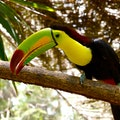 Admire Rare Birds in Crooked Tree Wildlife Sanctuary Belize District  Belize