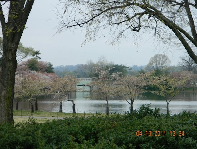 Step Away From the Museums and Take a Stroll Through the Cherry Trees