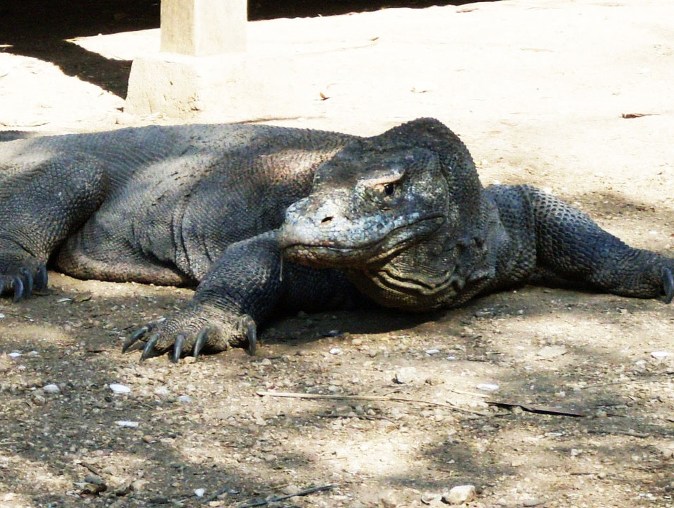 Komodo, the dragon´s island Komodo  Indonesia
