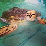 Turtle Rehabilitation Center