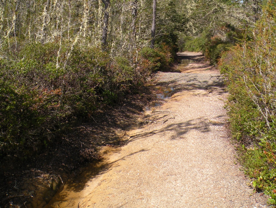 Hike through the pygmy forest at Salt Point