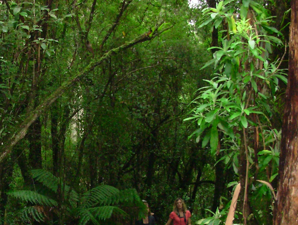 A Rainforest Walk At Great Otway National Park Cape Otway  Australia