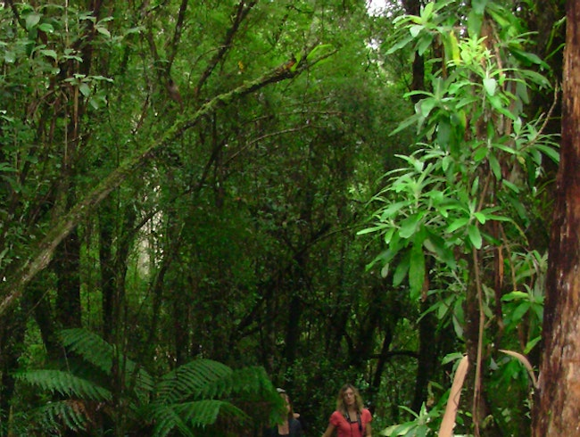 A Rainforest Walk At Great Otway National Park