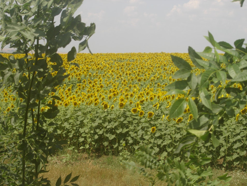 Field of Sun  Cahul  Moldova