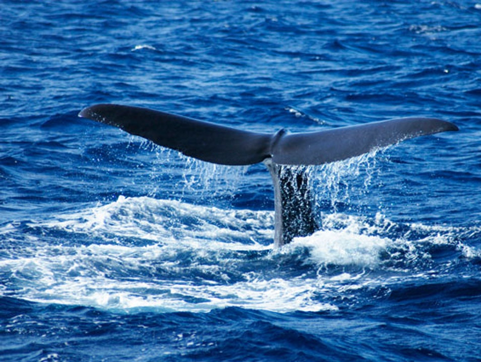 365 Days of Birding and Whale Watching