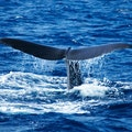 365 Days of Birding and Whale Watching Saint Joseph Parish  Dominica