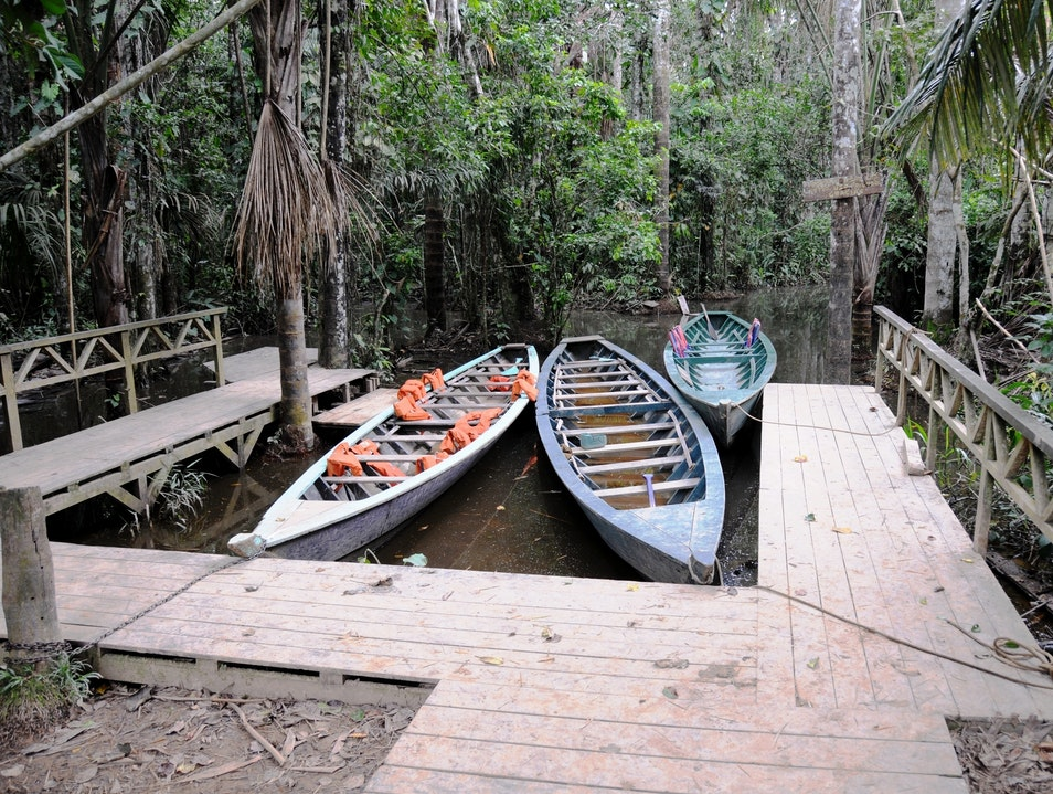 Row A Boat to the One-of-a-Kind Lake Sandoval in the Peruvian Amazon Tambopata  Peru