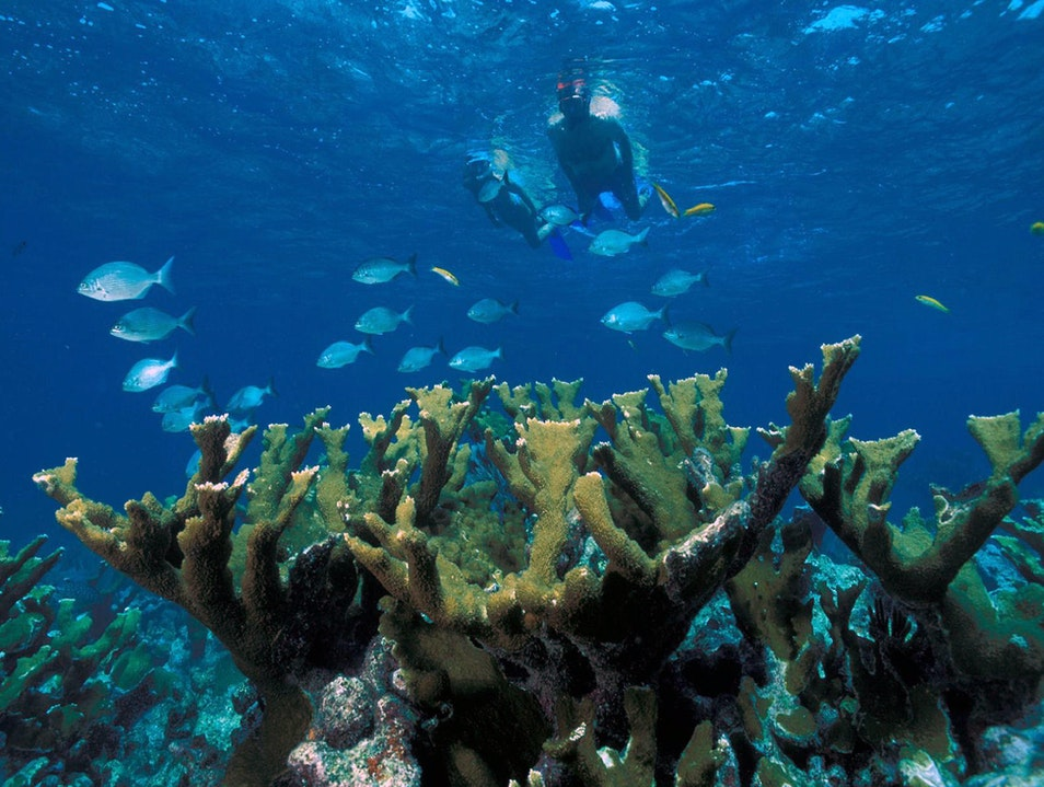 Snorkel North America's Only Living Reef Key West Florida United States