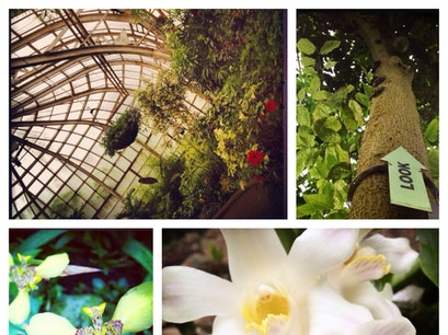 Lincoln Park Conservatory Chicago Illinois United States