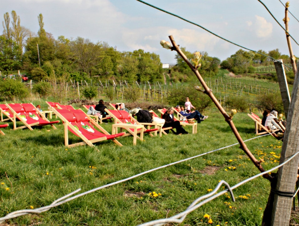 Relaxing in the Viennese vineyards on Nussberg Vienna  Austria