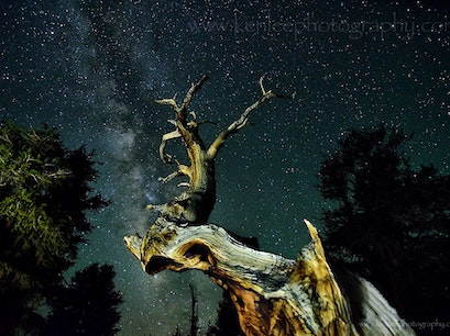 Ancient Bristlecone Pine Forest Visitor Center Bishop California United States