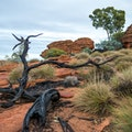 Kings Canyon - Watarrka National Park Petermann  Australia