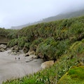 Truman Track Paparoa National Park  New Zealand