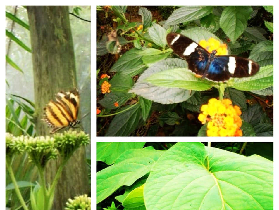 Beautiful Butterflies and Interesting Insects in the Mountains of Monteverde Costa Rica Puntarenas  Costa Rica