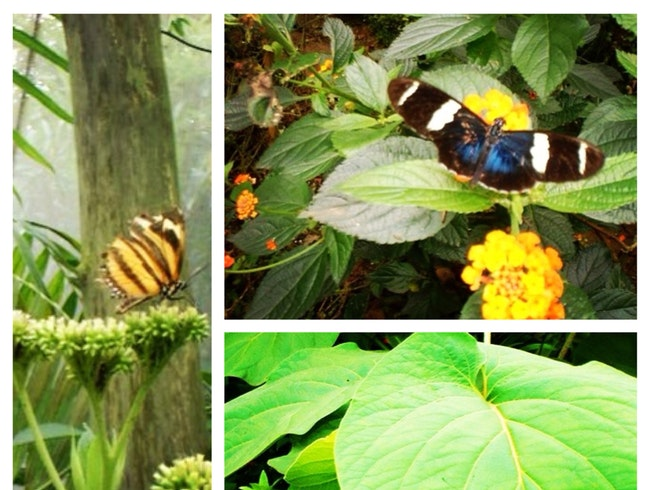 Beautiful Butterflies and Interesting Insects in the Mountains of Monteverde Costa Rica