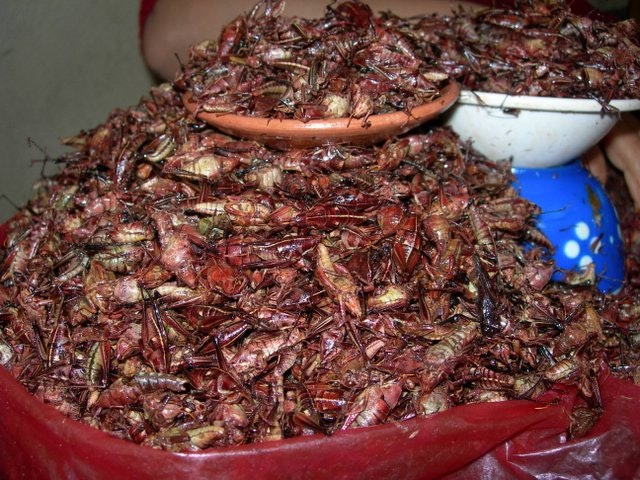 Chapulines where to buy