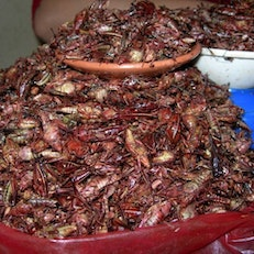 Chapulines at a Oaxacan Market
