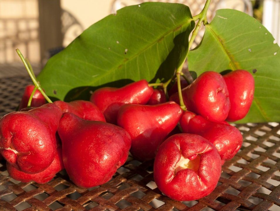 Ruby Red Mountain Apple Honolulu Hawaii United States