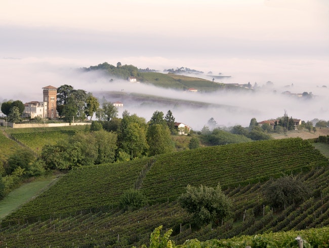 Private Tastings in the Piedmont Countryside