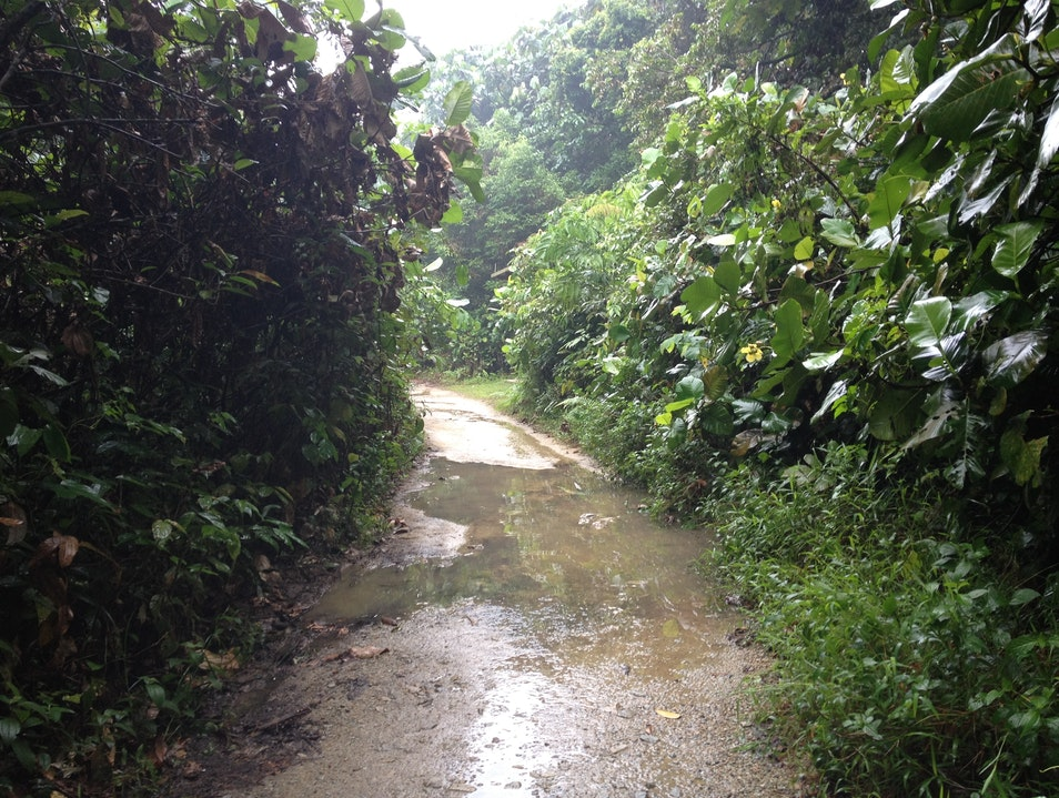 It's a Jungle Out There: Green Trails and Treetop Walk in MacRitchie