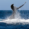 Whale-Watching in St. Lucia Castries  Saint Lucia