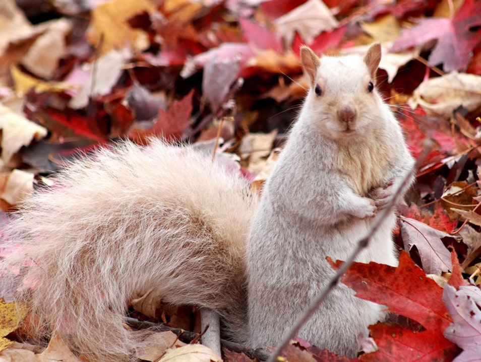 Home of the Elusive White Squirrel
