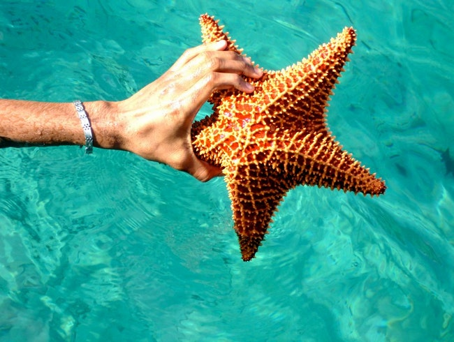 Amazing starfish from Martinique