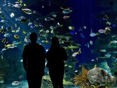 Ripley's Aquarium of the Smokies Gatlinburg Tennessee United States