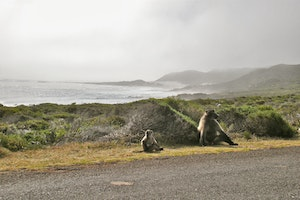A Day at Cape Point
