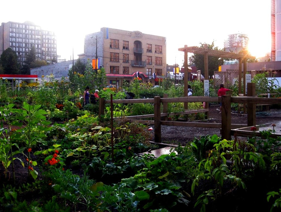 A Plentiful Urban Garden in Downtown Vancouver Vancouver  Canada