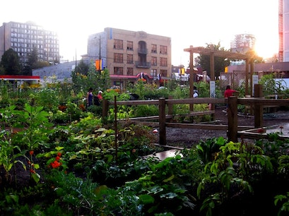 Davie Village Community Garden Vancouver  Canada