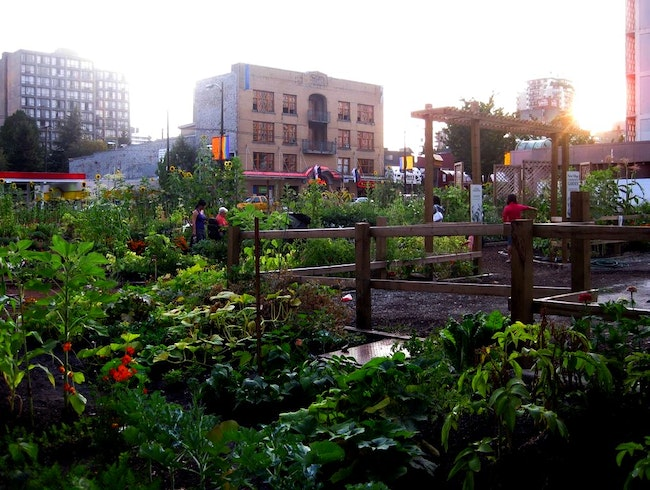 A Plentiful Urban Garden in Downtown Vancouver