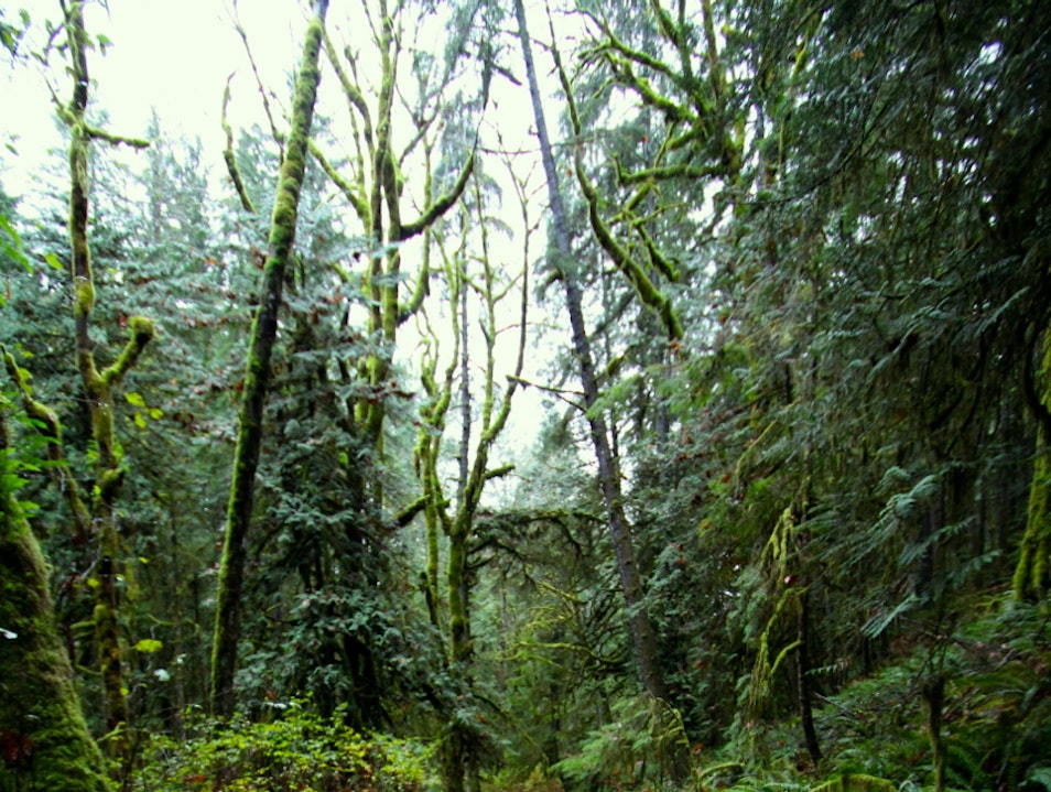 Wicked Forest Sechelt  Canada