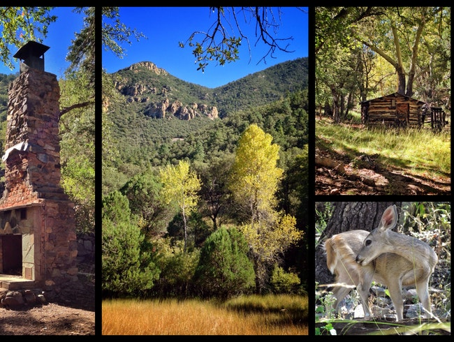 "HIking a ""Sky Island"" Canyon: Hummingbirds, Homesteads, Deer, and Bears"