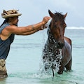 Go Horseback Riding and Whale Watching on The Austral Islands Huahine  French Polynesia